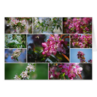Apple Blossoms and Honey bees Card