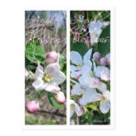 APPLE BLOSSOMS BOOKMARKS POST CARD