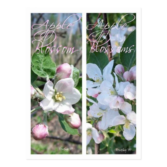 APPLE BLOSSOMS BOOKMARKS POSTCARD