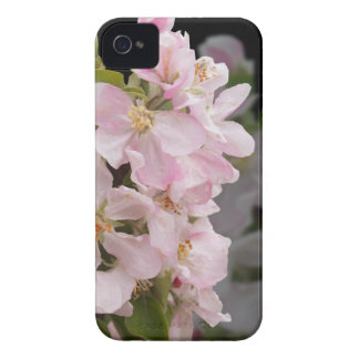 Apple Blossoms iPhone 4 Covers