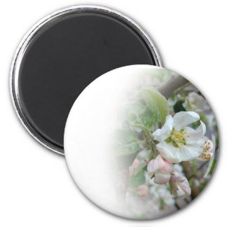 Apple Blossoms Fading Away 2 Inch Round Magnet