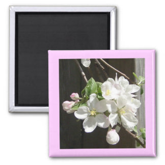 Apple Blossoms & Flowers 2 Inch Square Magnet