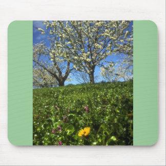 Apple blossoms, Hood River, Oregon Mouse Pad