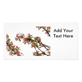 Apple Blossoms in Spring Custom Photo Card