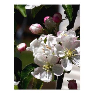 Apple Blossoms Letterhead