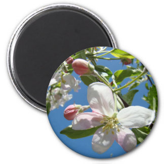 APPLE BLOSSOMS MAGNETS Pink Blossoms Apple