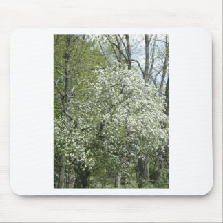 Apple Blossoms Mouse Pad