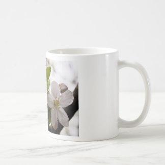 Apple Blossoms Mugs