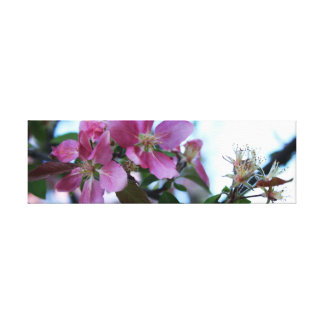 Apple Blossoms - narrow Canvas Print