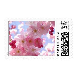 apple blossoms postage stamp