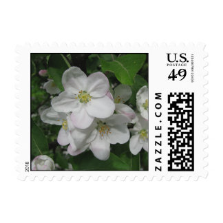 Apple Blossoms Postage
