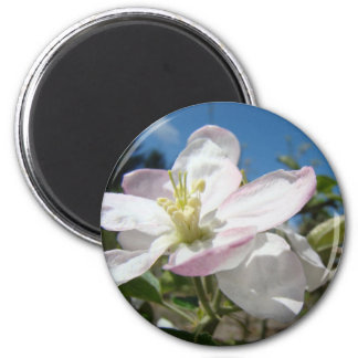 Apple BLOSSOMS Spring Flowers MAGNET MAGNETS Gifts