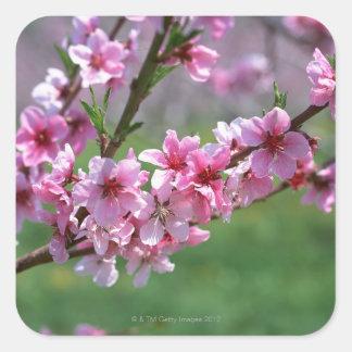Apple Blossoms Square Sticker