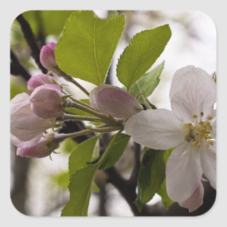 Apple Blossoms Stickers