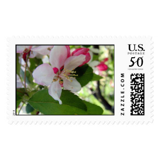 Apple Bossom | Postage Stamps