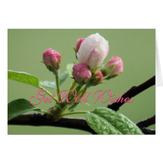 Apple Buds Card- customize any occasion Greeting Card