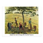 Apple cosecha en Eragny de Camille Pissarro Postal