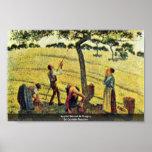 Apple cosecha en Eragny, por Camille Pissarro Impresiones