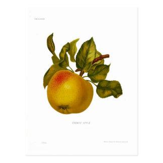 Apple de las piedras tarjetas postales