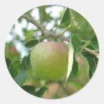 Apple Etiqueta Redonda