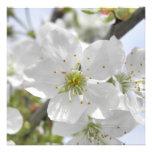 Apple florece anuncios