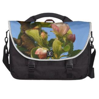 Apple florece cielo todavía cerrado, azul bolsas de portátil