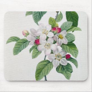 Apple florece, del 'DES de Les Choix más bellezas Alfombrilla De Ratón