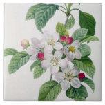 Apple florece, del 'DES de Les Choix más bellezas Azulejo Cuadrado Grande