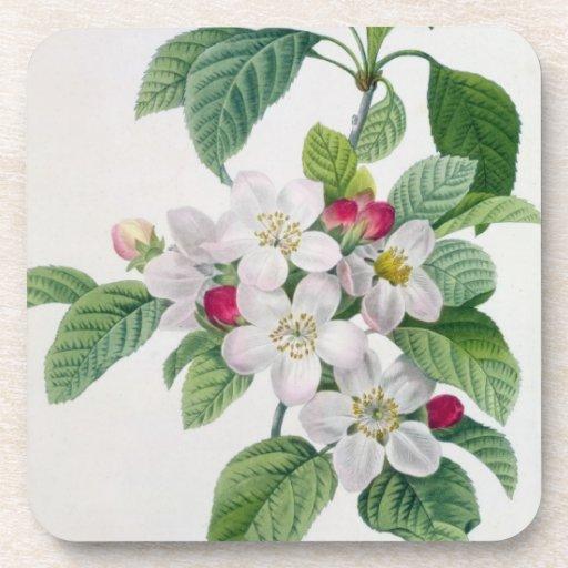 Apple florece, del 'DES de Les Choix más bellezas Posavasos