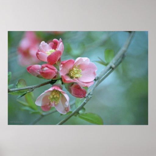 Apple florece el poster #P0356 Póster