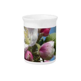 Apple florece en primavera jarras