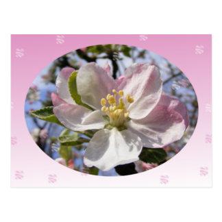 Apple florece flor tarjeta postal