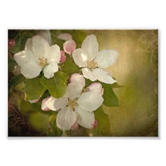 Apple florece impresión de la foto del racimo fotografías