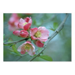 Apple florece la mini impresión #P0356 Tarjeta Personal