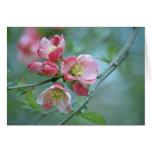 Apple florece la tarjeta #P0356
