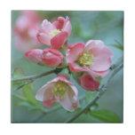 Apple florece la teja #P0356