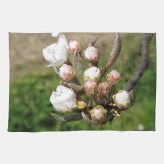 Apple florece los brotes cerrados en primavera toalla