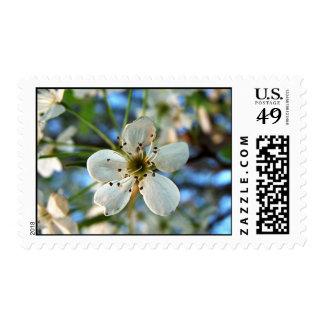 Apple florece los sellos