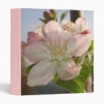 Apple florece macro
