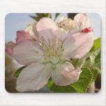 Apple florece macro alfombrilla de raton