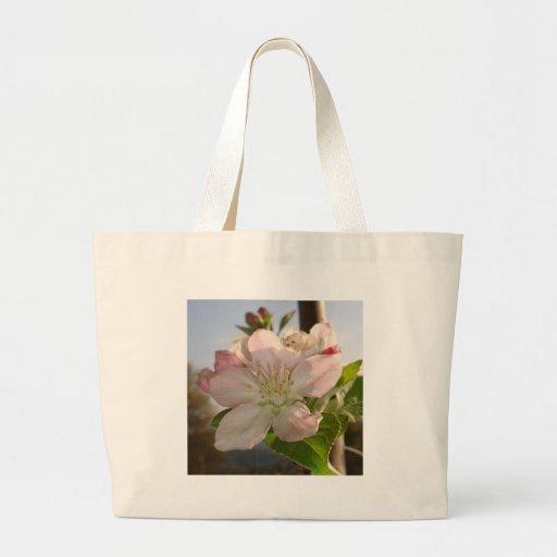 Apple florece macro bolsas