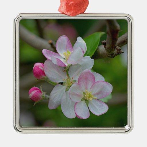 Apple florece ornamentos para reyes magos