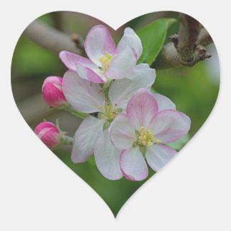 Apple florece pegatina en forma de corazón