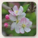 Apple florece posavaso