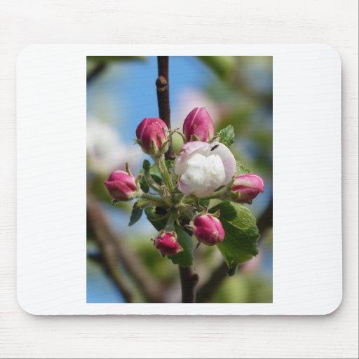Apple florece primer alfombrillas de ratones