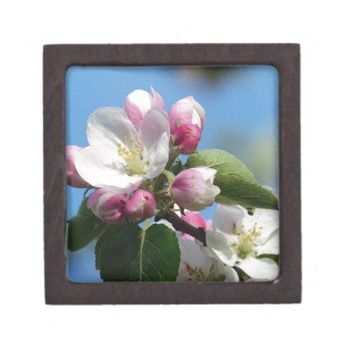 Apple florece primer caja de recuerdo de calidad