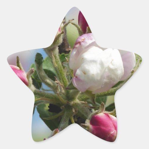 Apple florece primer calcomanía cuadrada