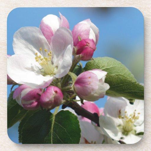 Apple florece primer posavasos