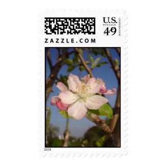 Apple florece franqueo