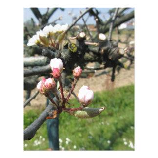 Apple flower closed buds in spring letterhead